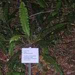 Maungatautari