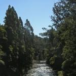 Waipoua