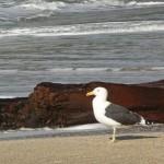 Cooks Beach