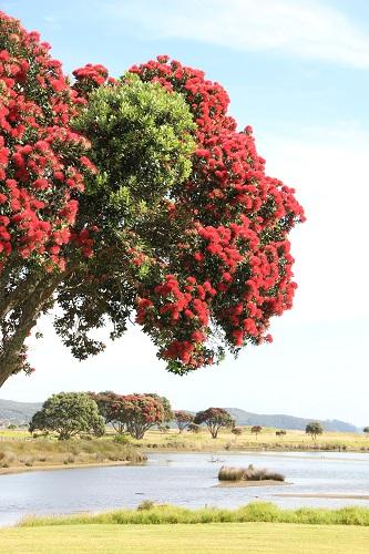 Bei Tawharanui