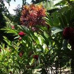 Mele Cascades Wasserfall - Der Garten Eden