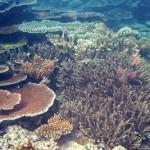 Hat Island Korallen