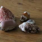 Hat Island - Muschelvielfalt