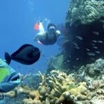 Sailaway - Hat Island - Schnorcheln mit Doktorfisch und Königin Drückerfisch