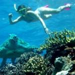 Sailaway - Hat Island - Schnorcheln mit Schildkröte