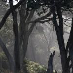 Potentielle Hobbit-Ökonische ... Matamata ist nicht einmal weit weg
