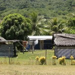 Dorf in Vanuatu