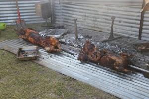 Schweinshaxen, porchetta, auf Maori