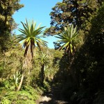 Gepflegter Wanderweg am Fuß des Bergs