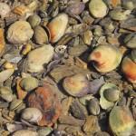 Muschelhalde nahe Havelock