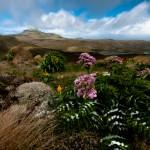 Seltener Anblick: Campbell Island im Sonnenschein (c) Gunther Riehle