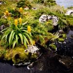 Idyllischer Flecken auf Auckland Island (c) Gunther Riehle