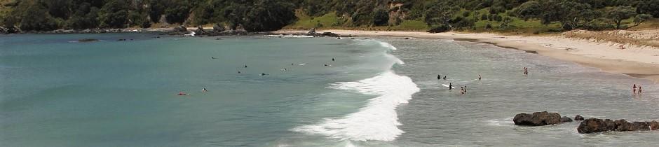 Tawharanui beach life, New Zealand