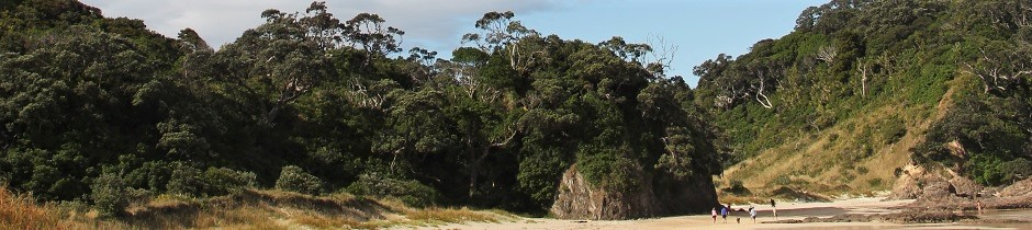 Bushland at Matapouri, New Zealand