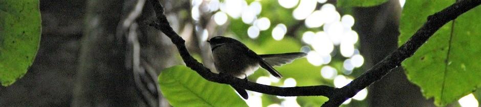 Taupo-Birdie.jpg
