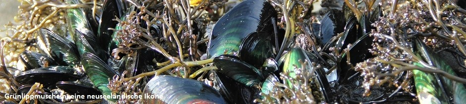 Green lipped mussels, New Zealand