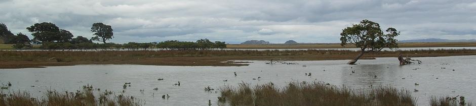 Swamp, Coromandel, New Zealand