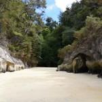 Regenwald trifft Meer
