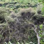 Herrliches Buschland auf dem Weg zum Wharariki Beach