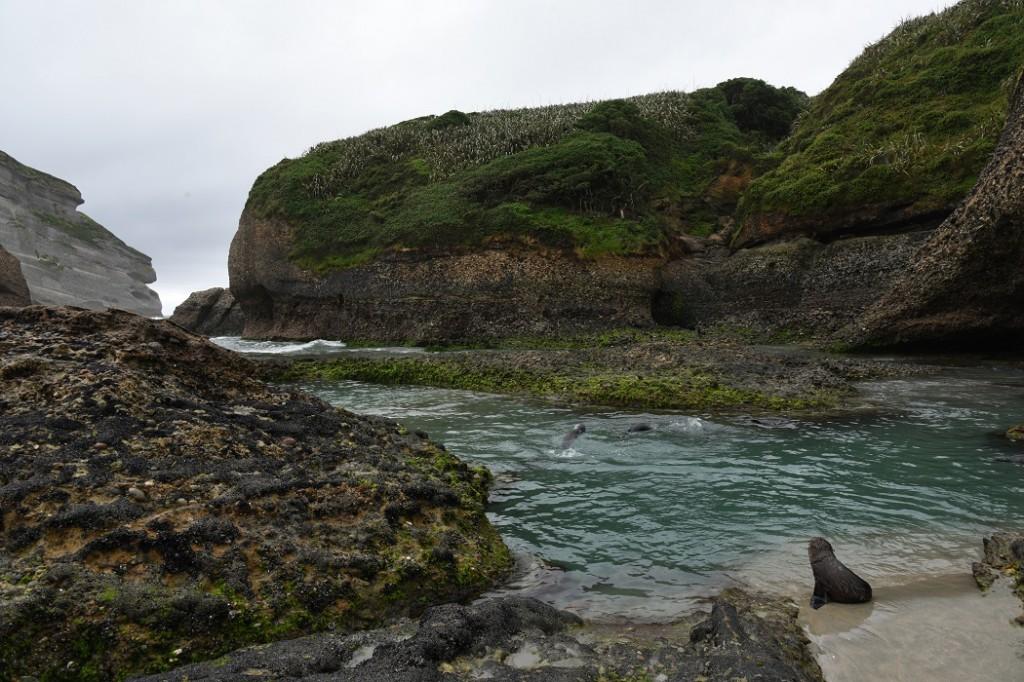 Der Robbenkindergarten von Wharariki