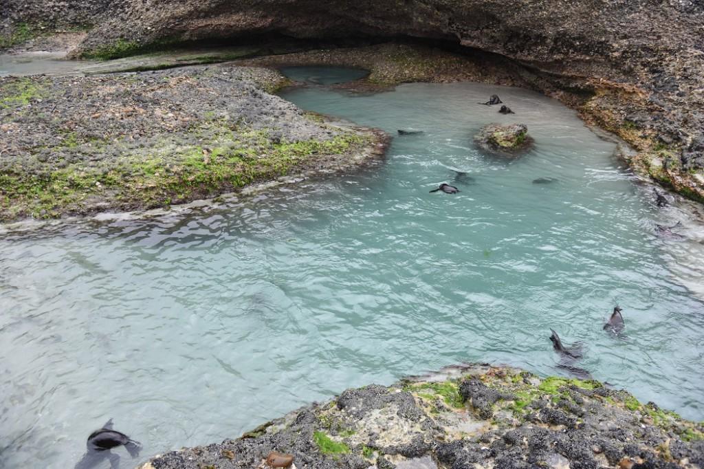 Pools und Höhlen, ideal für Robbenbabies
