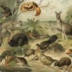 Australische Fauna (c) ATL Wellington